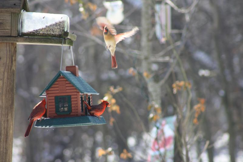 Dining at the Bird Feeder