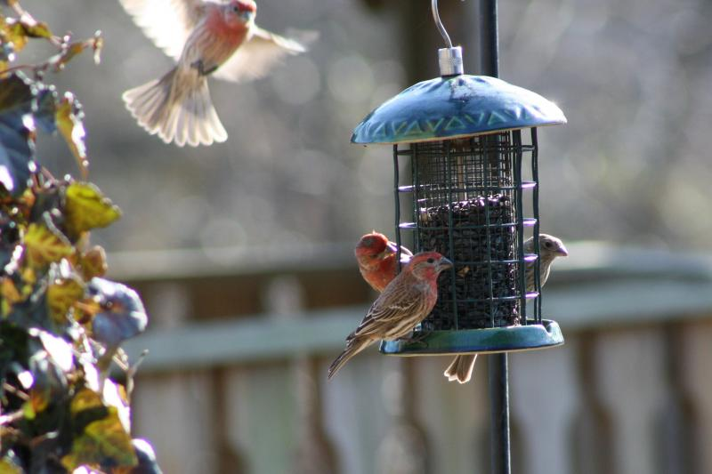 The finches are busy!